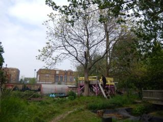 Wild Life Gardens (Tidemill, Deptford)